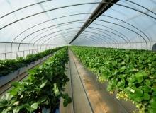 [고령]스마트팜 생산시설 투자로 첨단농업 육성
